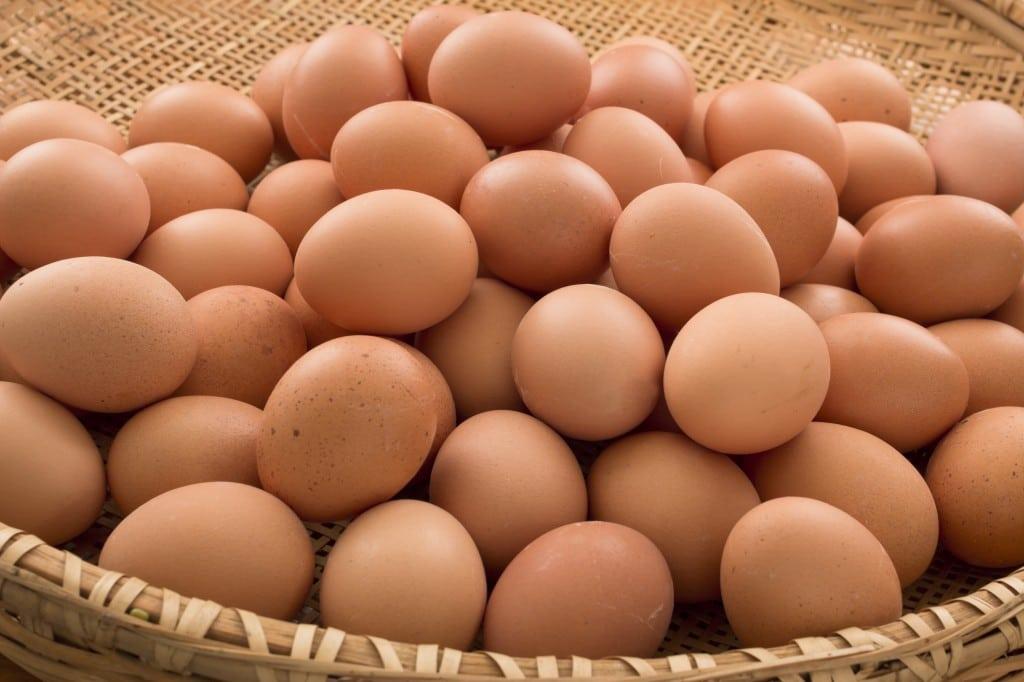 - ovos - Ovos contaminados: Angola foi notificada mas não iniciou investigação, alegadamente por não importar ovos para consumo humano
