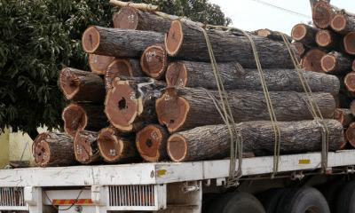 campanha florestal/2017 suspensa a partir desta quarta-feira - Madeireiros ilegais refor  am corte da madeira em Tete 400x240 - Campanha florestal/2017 suspensa a partir desta quarta-feira