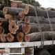 campanha florestal/2017 suspensa a partir desta quarta-feira - Madeireiros ilegais refor  am corte da madeira em Tete 80x80 - Campanha florestal/2017 suspensa a partir desta quarta-feira