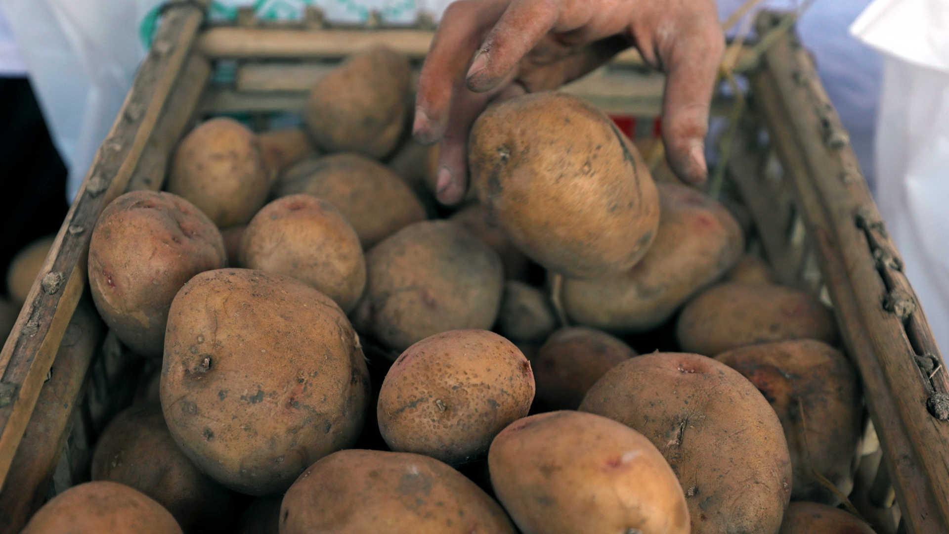 granada da i guerra encontrada em hong kong no meio de batatas importadas - BATATA - Granada da I Guerra encontrada em Hong Kong no meio de batatas importadas