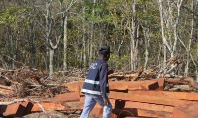 - 0462e1635 cd5a 4ff8 bffa 05a6f4d562dc r NjQweDM0NQ 400x240 - Chineses detidos por exploração ilegal de madeira na província do Moxico