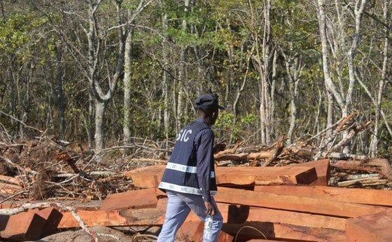 - 0462e1635 cd5a 4ff8 bffa 05a6f4d562dc r NjQweDM0NQ 560x345 - Chineses detidos por exploração ilegal de madeira na província do Moxico