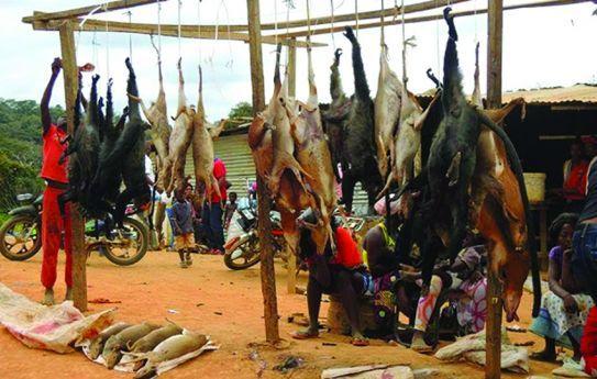 - carne de ca a - INADEC alerta para consumo da carne de caça